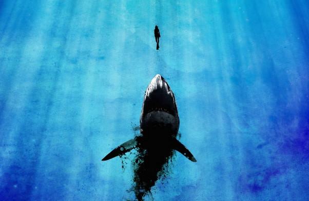 Diver and Shark Wallpaper